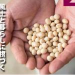 唯一無二。ここにしかない特別な大豆(広報さよう 平成29年8月号)