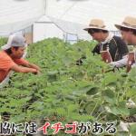 イチゴが育む人とまち(広報にしわき 平成29年9月号)