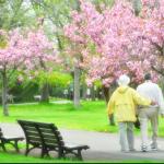 Spring has come☆広報紙で見つけた桜がキラキラな表紙6選