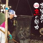 ご当地グルメは奇跡の海の魚たち(広報いぶすき 平成29年10月号)