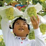 農業の未来を実りあるものにするために(広報なかの 平成29年11月号)