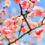 もうすぐ春ですね。広報紙に恋してみませんか?な10選